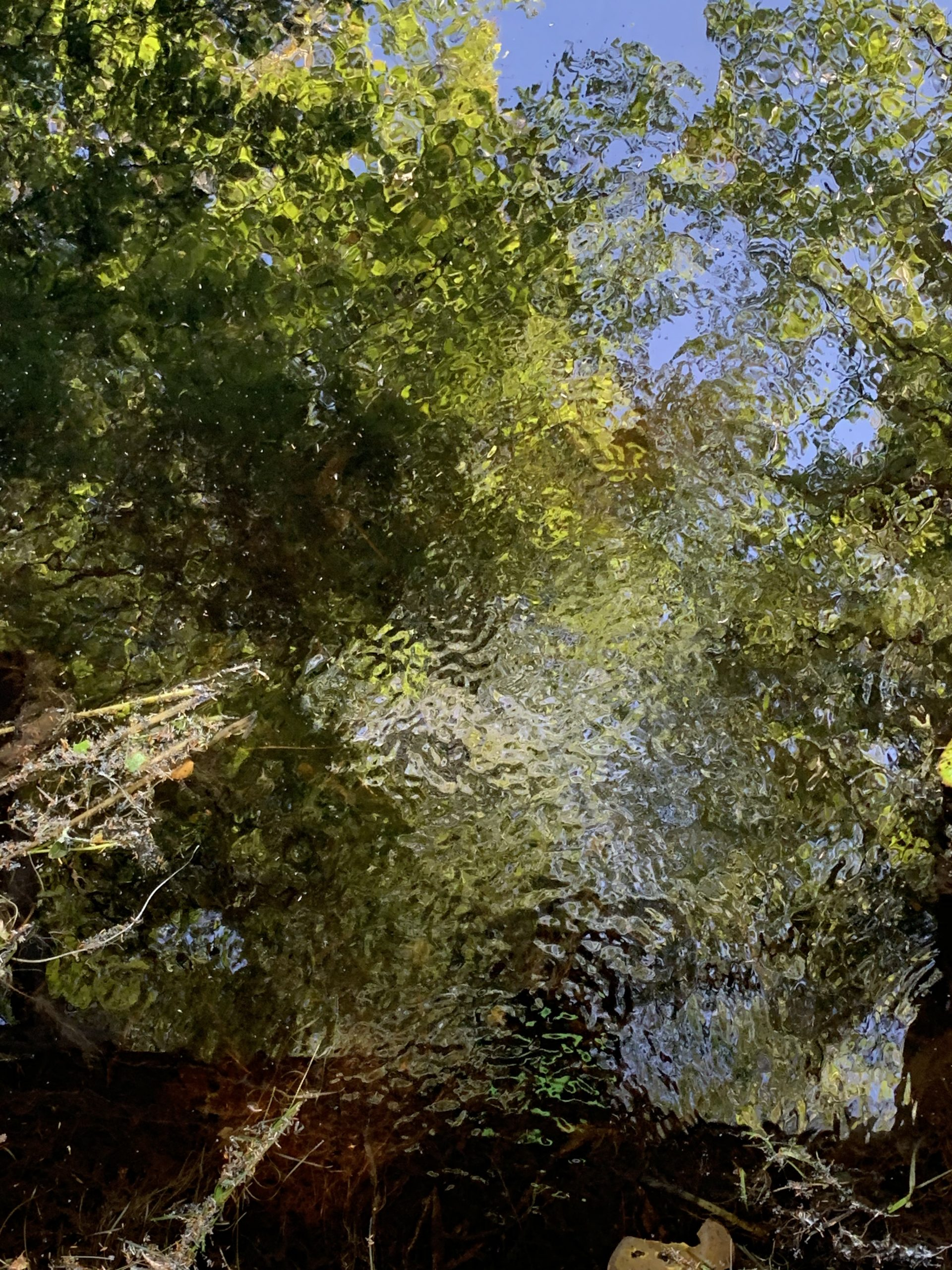 Picture of Trees in August reflected in a Vernal Stream in New England