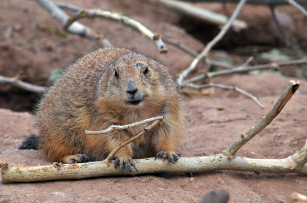 The Groundhog digs themselves a hole....Groundhog-ites United?